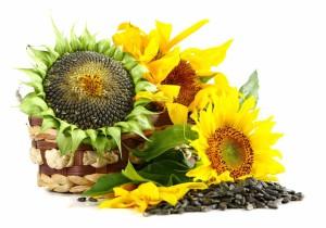 Semenke suncokreta za smanjenje krvnog pritiska
