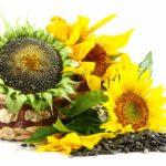 Semenke suncokreta za smanjenje krvnog pritiska. Provereni recept.