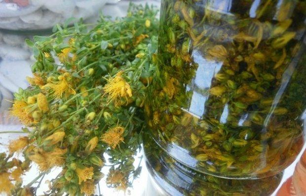 Kako napraviti kantarionovo ulje