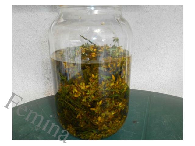 Kako napraviti kantarionovo ulje. Za šta je dobro i kako se koristi.
