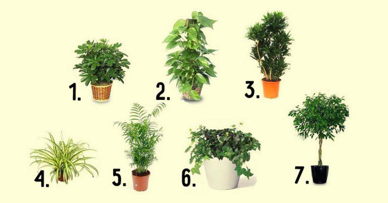 Sobne biljke za pročišćavanje vazduha. 7 biljaka za vaše zdravlje.