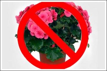 Koje sobne biljke je opasno po zdravlje imati u kući!