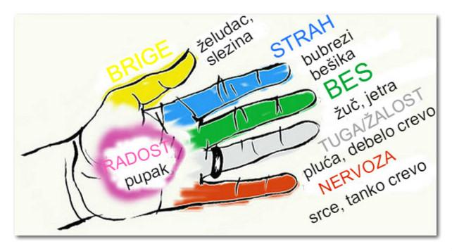 Organi tela koji su povezani sa prstima: