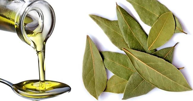 Čudo sredstvo protiv mnogih bolesti: neverovatna svojstva lovorovog ulja.