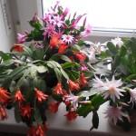 Mali trik: da vaše biljke cvetaju dugo i bogato.
