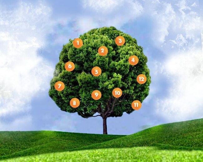 Drvo želja: zamislite želju, izaberite plod i saznajte šta vas čeka.