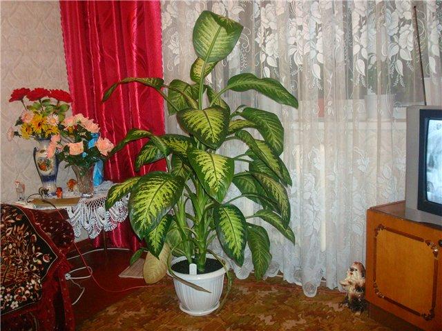 Ova sobna biljka može ubiti dete za nekoliko minuta!