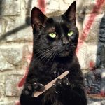 Naučnici su, napokon, objasnili kako nam mačke produžavaju život.