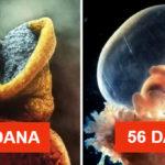 Kako nastaje  ljudski život.