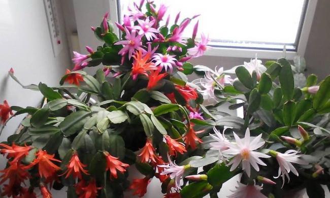 Korisni saveti za sve ljubitelje sobnih biljaka.
