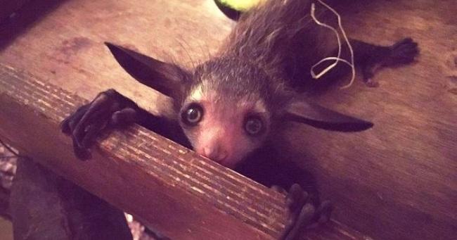 15 životinja za čije postojanje nikad niste čuli
