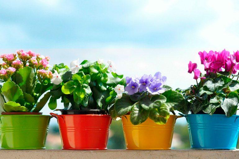 Bujno cvetanje i lepo lišće omogućiće nam ovaj rastvor.