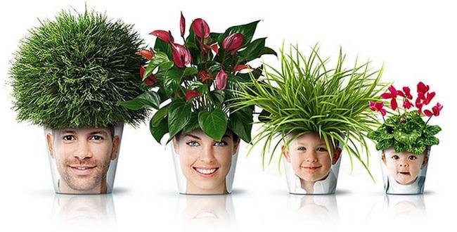6  biljaka koje će doneti pozitivnu energiju u vaš dom.