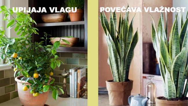 10 biljaka za idealnu mikroklimu vašeg doma