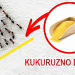 3 bezopasna načina da se rešite insekata u kući